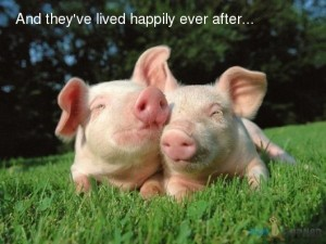 Funny-Animals-And-they-ve-lived-happily-ever-after